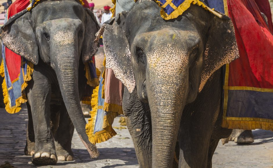 Family Vacation: 4 Wildlife Tours that Your Kids Will Love in India