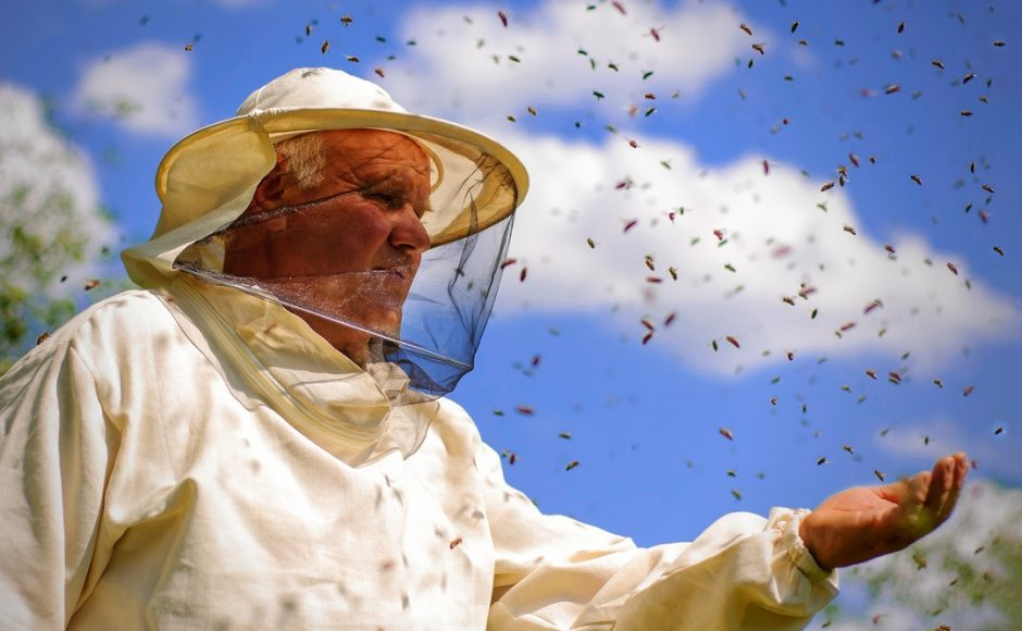 Buzz Off: 5 Safety Measures to Keep Bees Out of Your Home