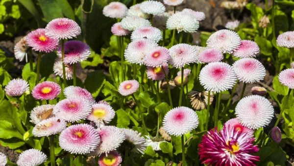 8 Best Garden Flowers for Beautiful Homes