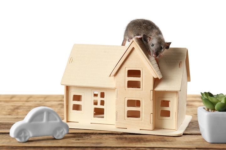 Where Do Mice Hide in a House? 6 Common Entry Points for Mice