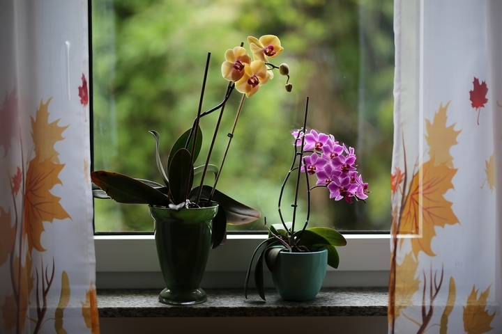 These are some of the most exotic, mysterious and elegant flowers a woman can receive. Orchids come in a variety of colours and shapes; from the very small, ...