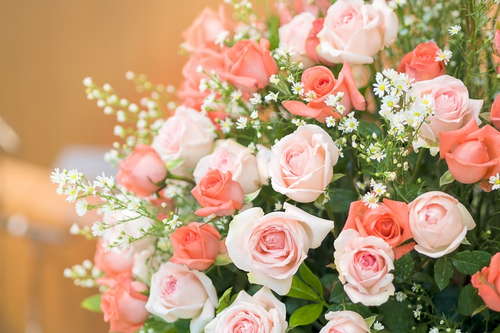 Roses are the most popular flowers in the world. This is perhaps informed by the fact that they express one of the strongest emotions on earth: love.