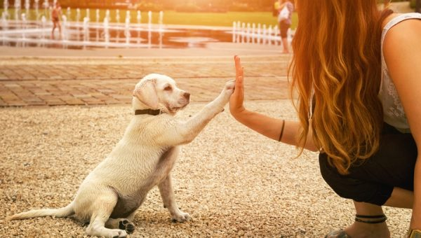 7 Best Dog-Friendly Activities to Do Outside