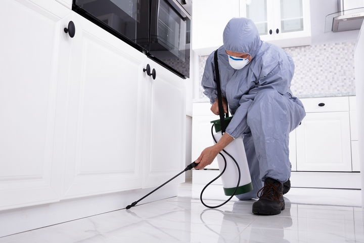 6 Benefits of Using a Pest Control Service